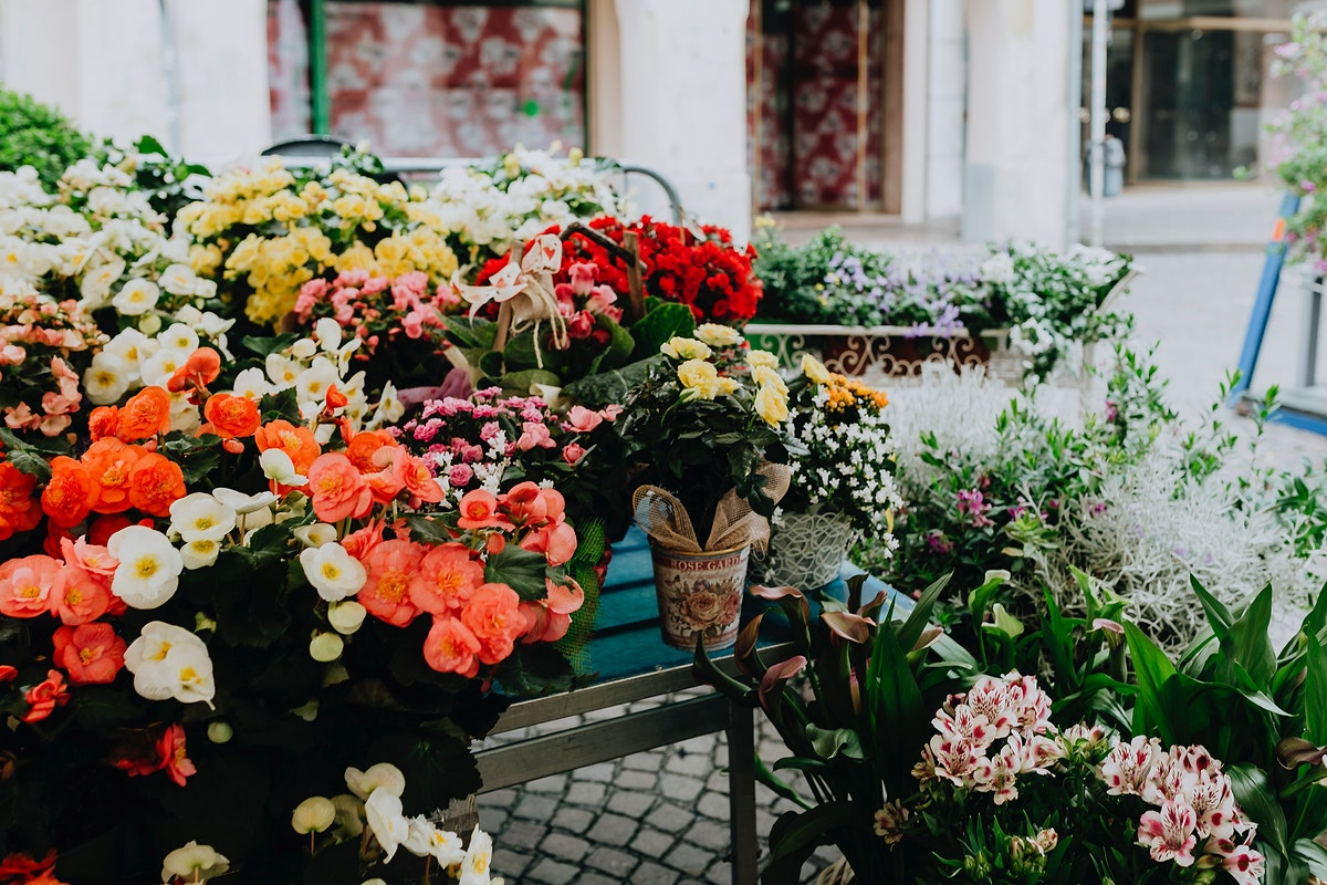 Variety of flowers at a market. Visit Kaboompics for more free images.