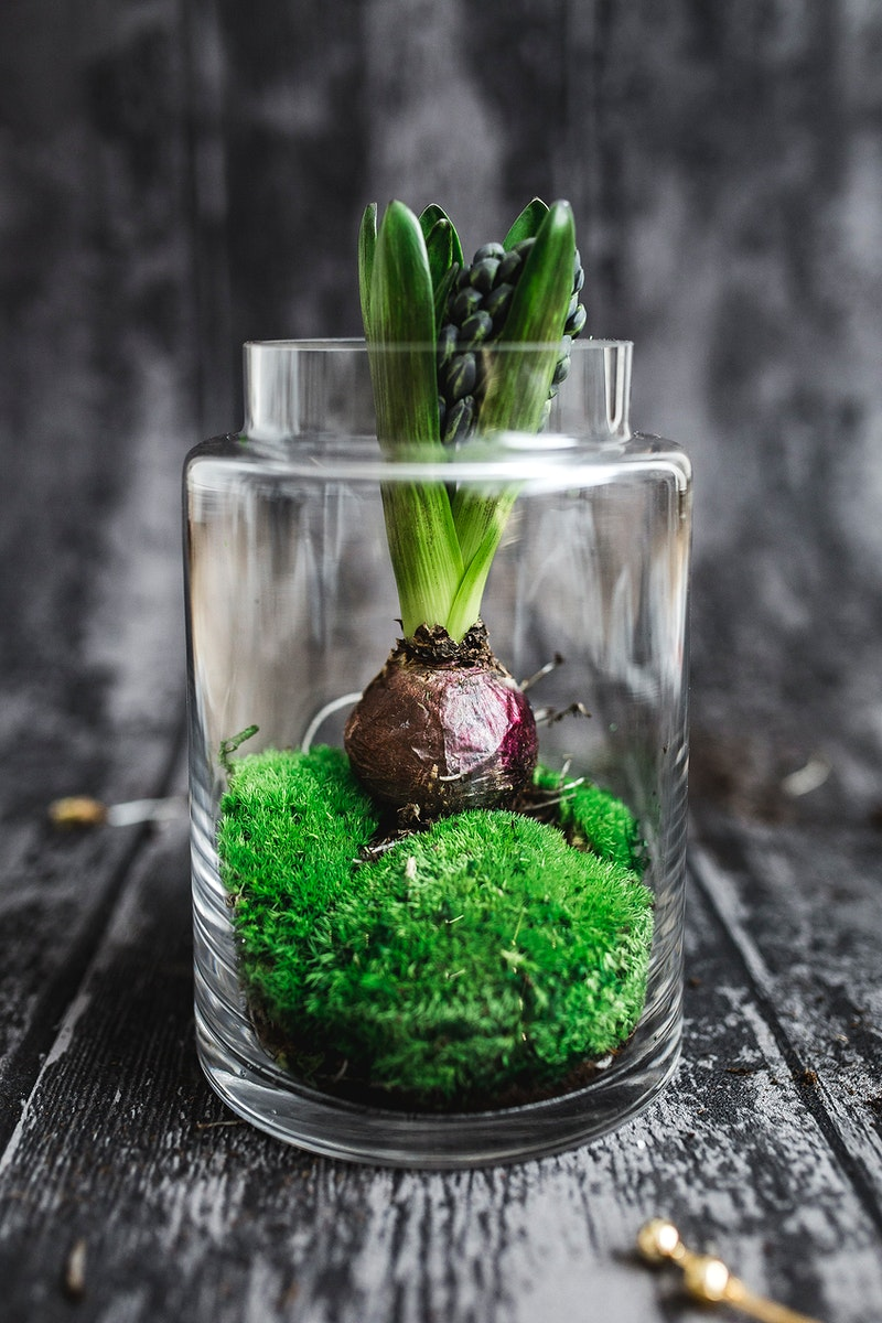 Hyacinth in a glass jar. Visit Kaboompics for more free images.