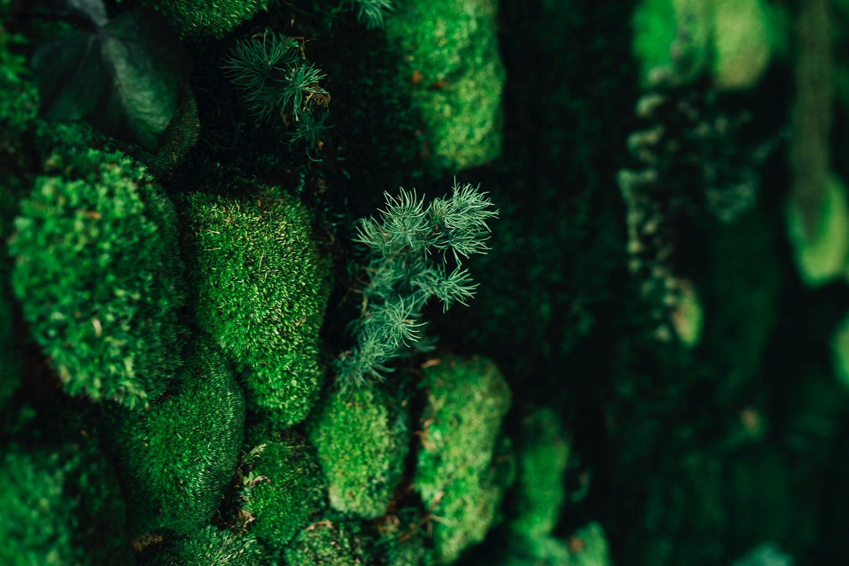 Green moss. Visit Kaboompics for more free images.