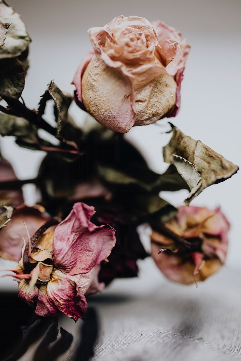 Dried pink roses. Visit Kaboompics for more free images.