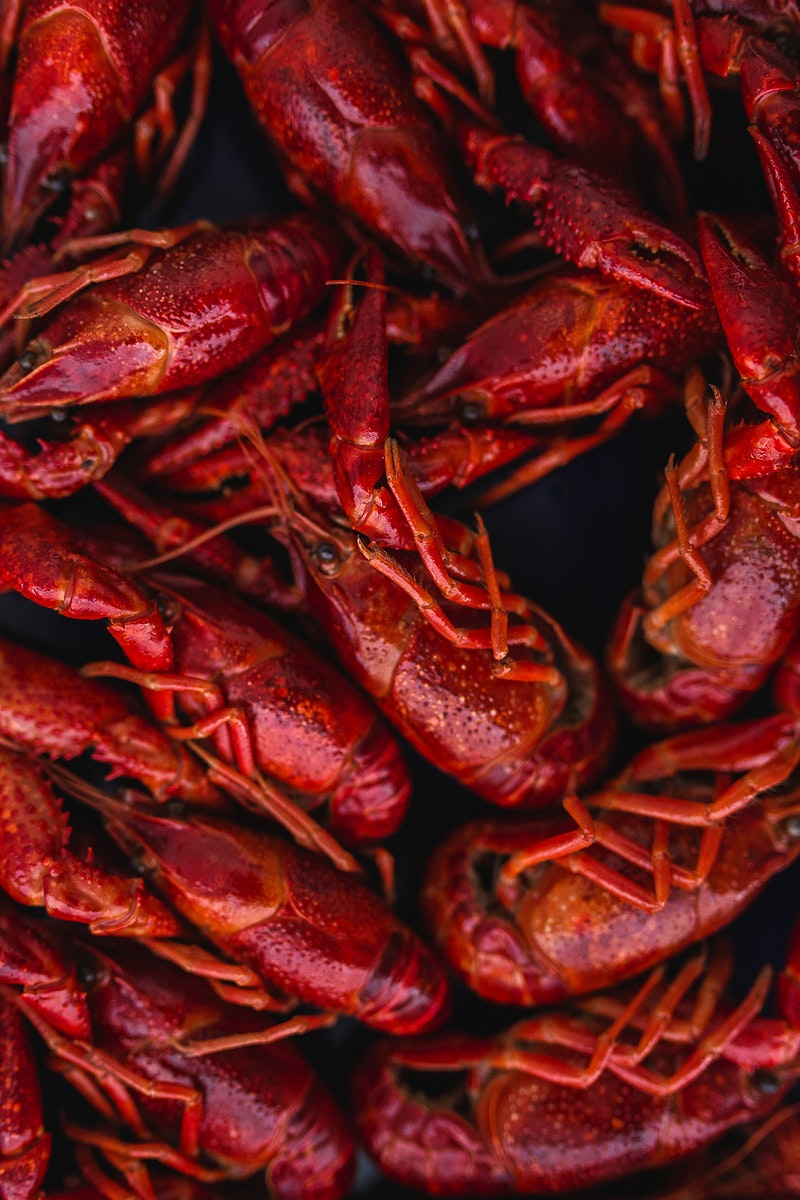 Close up of steamed crayfish. Visit Kaboompics for more free images.