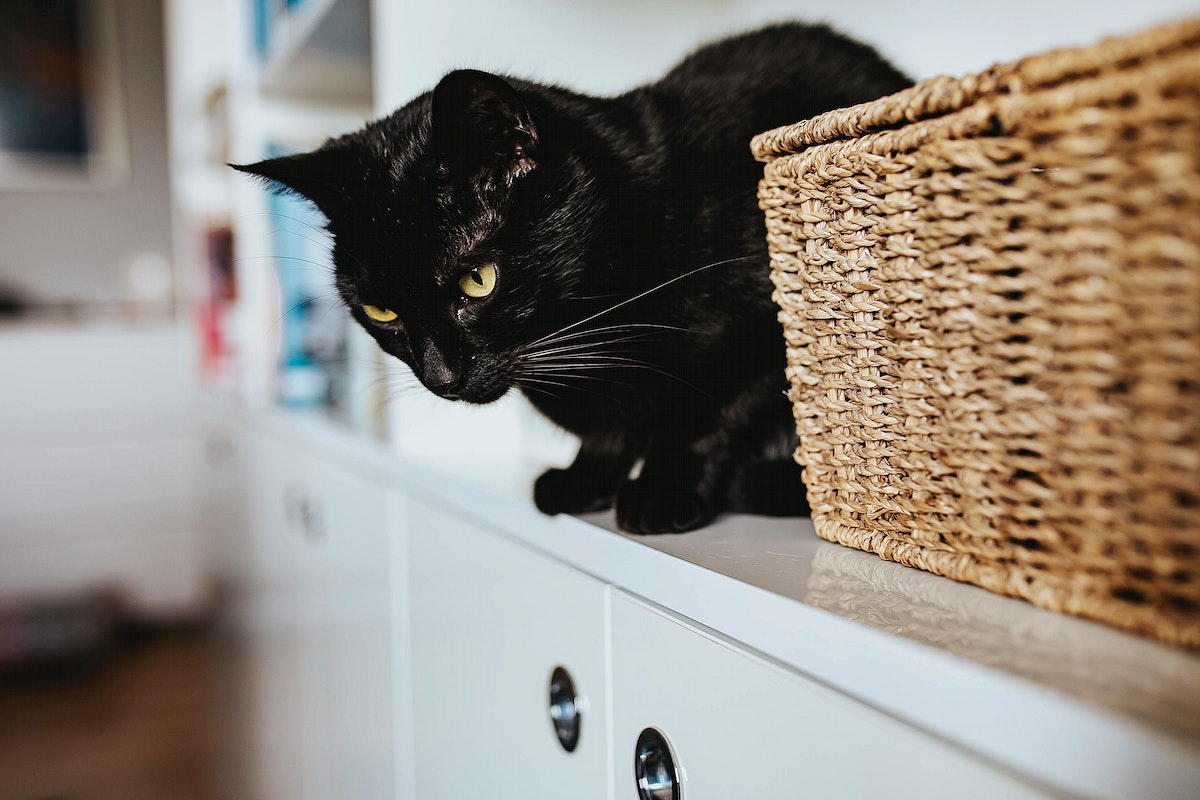 Black cat in the kitchen. Visit Kaboompics for more free images.