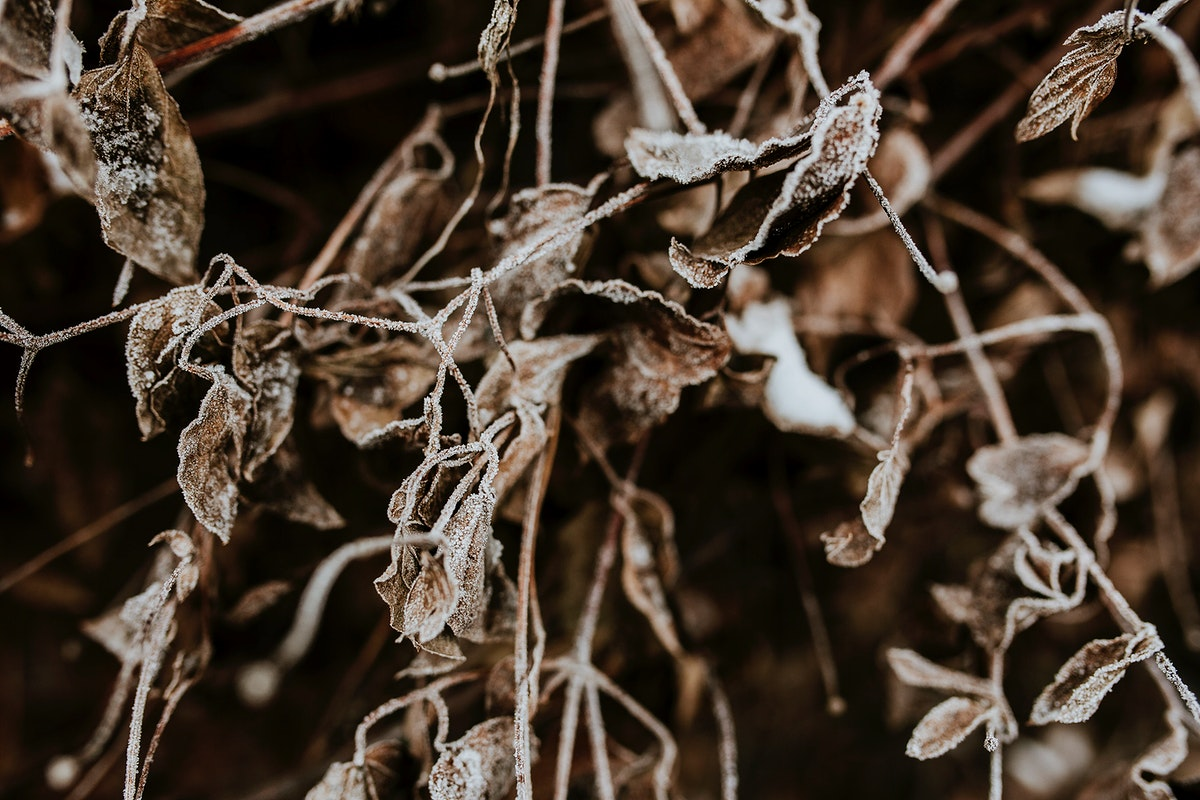 Dried foliage. Visit Kaboompics for more free images.