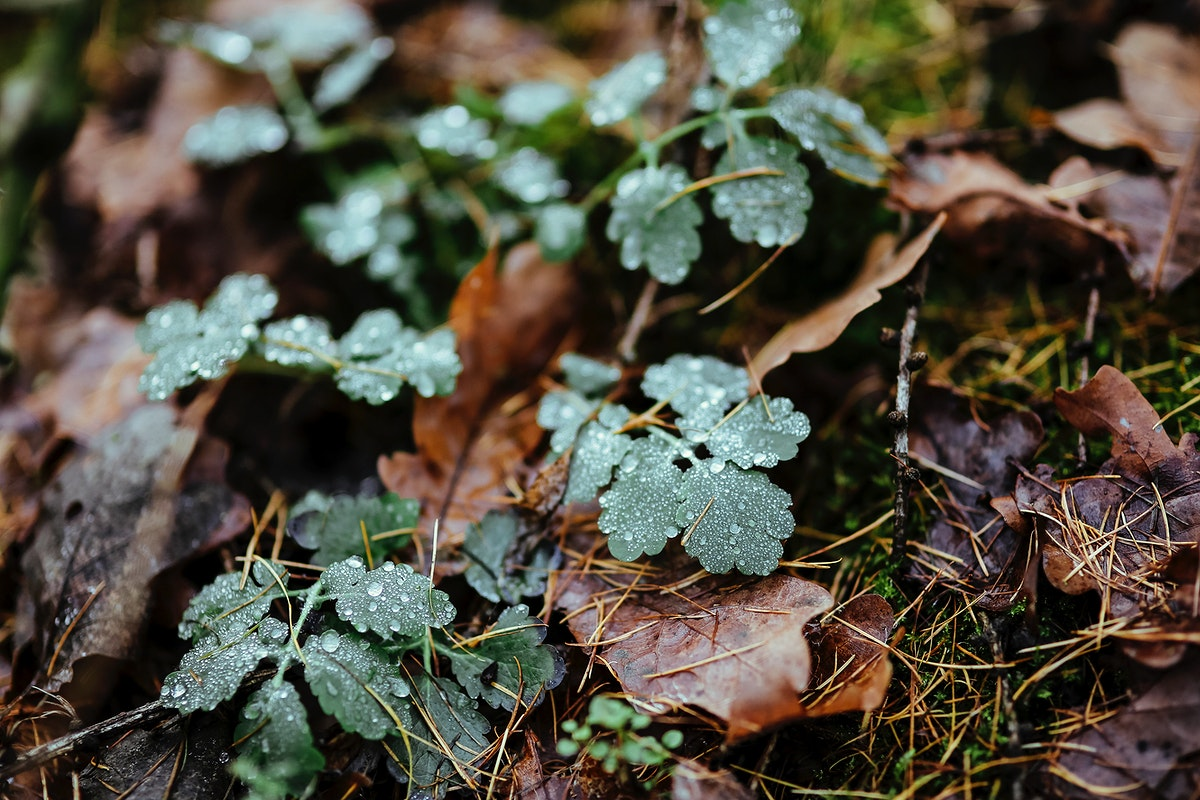 Green shrub on the ground. Visit Kaboompics for more free images.