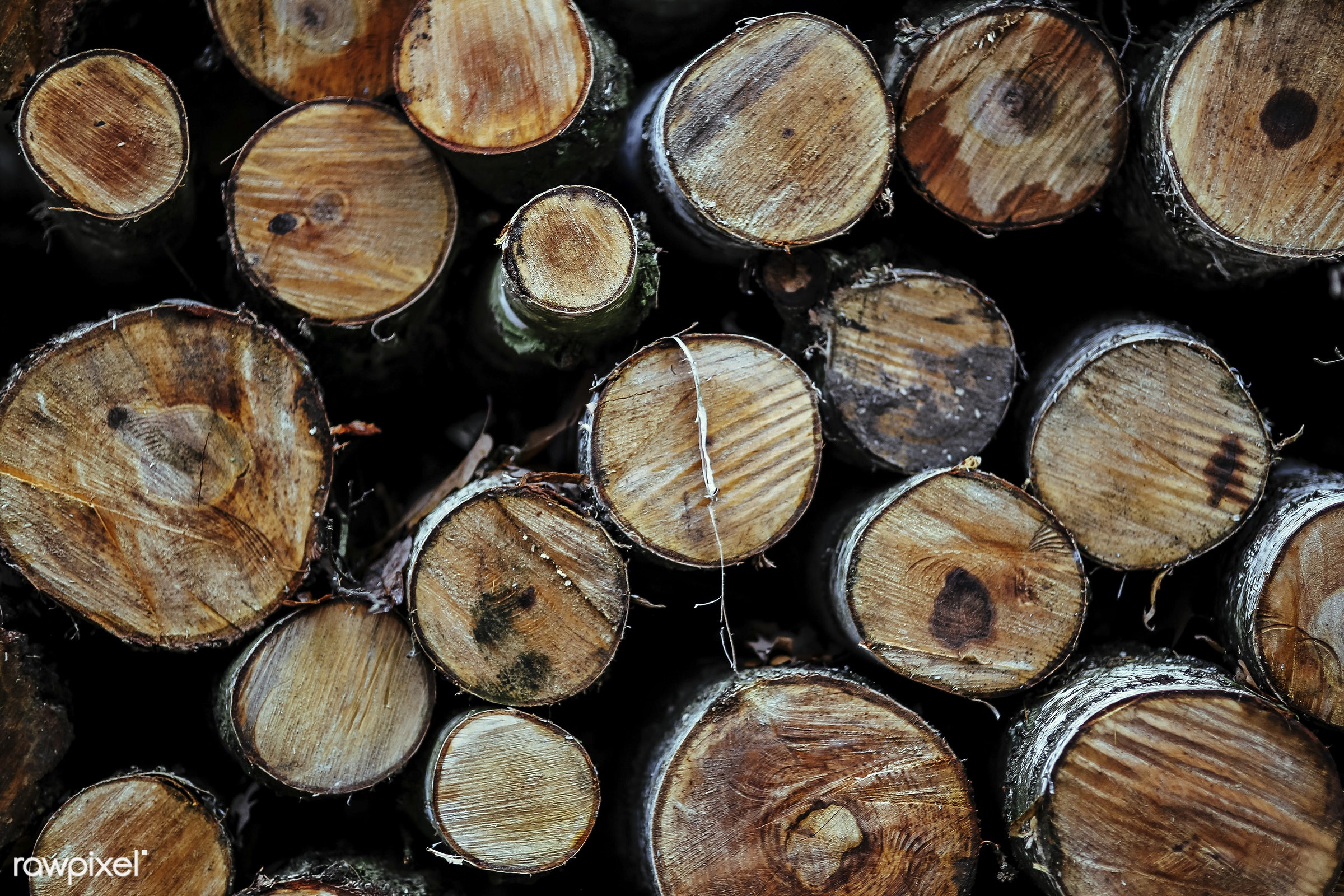 Close up of cut logs - autumn, brown, carpentry, close up, cut, deforestation, forest, logs, lumber, nature, outdoor, stump...