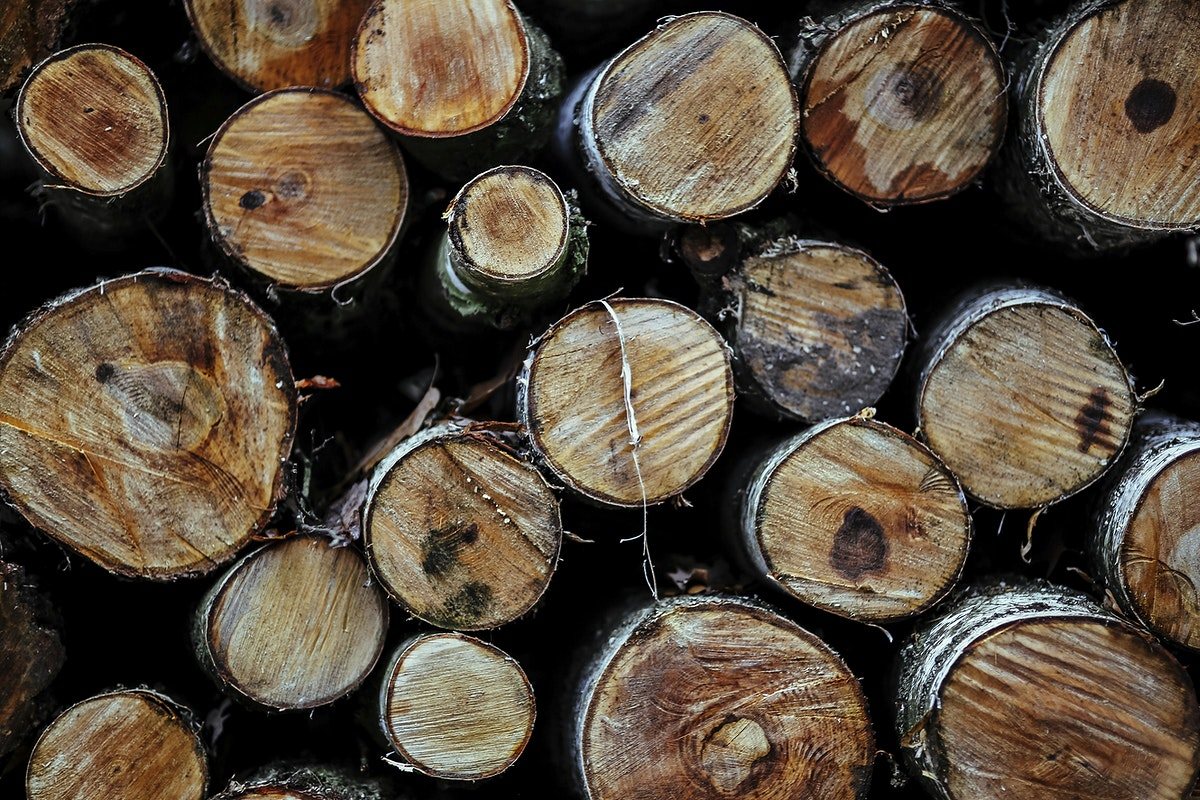 Close up of cut logs. Visit Kaboompics for more free images.