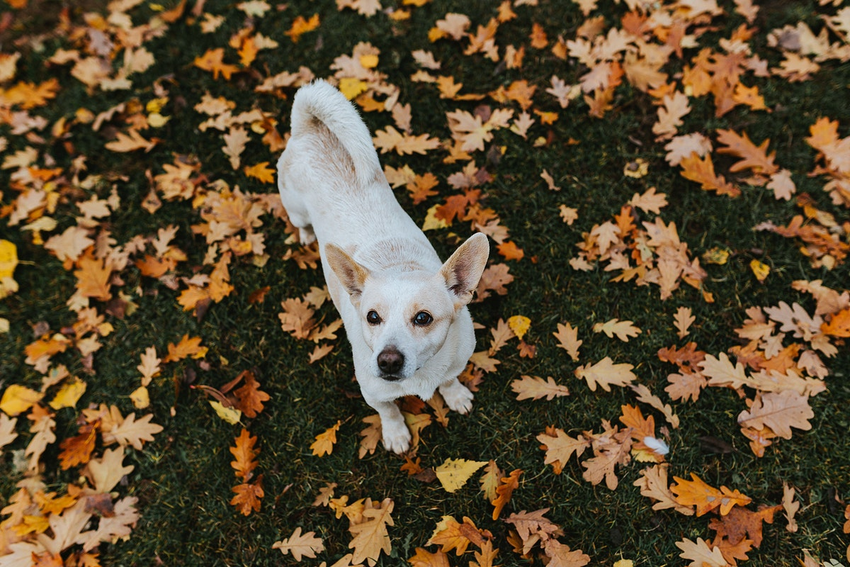 Cute little white dog. Visit Kaboompics for more free images.