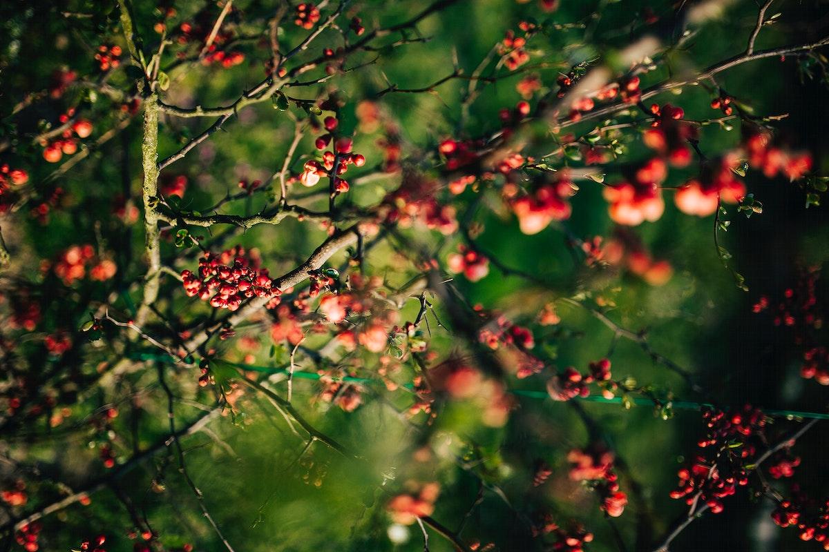 Closeup of berries. Visit Kaboompics for more free images.
