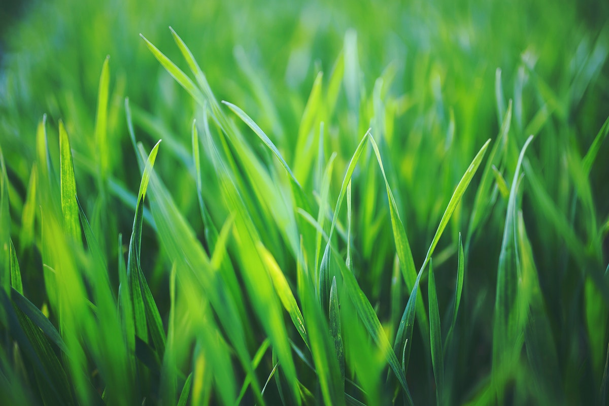 Closeup of grass. Visit Kaboompics for more free images.