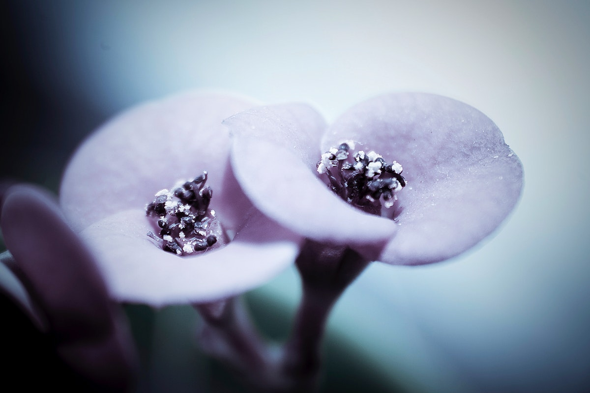 Close up of purple flowers. Visit Kaboompics for more free images.