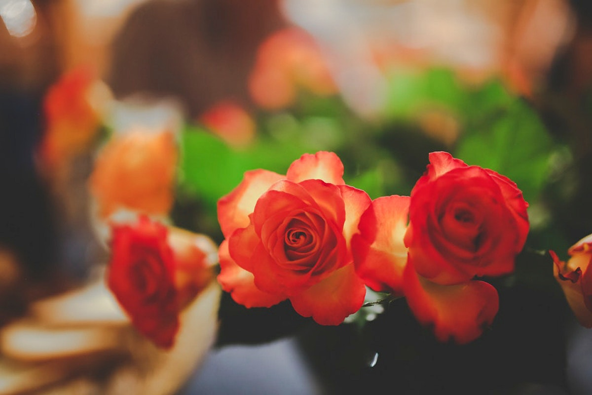 Beautiful roses in a vase. Visit Kaboompics for more free images.