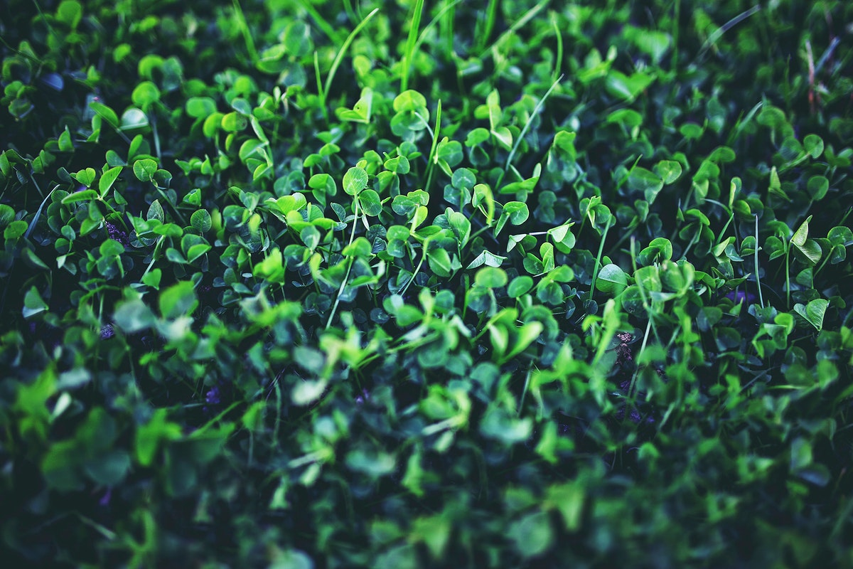Green baby leaves. Visit Kaboompics for more free images.