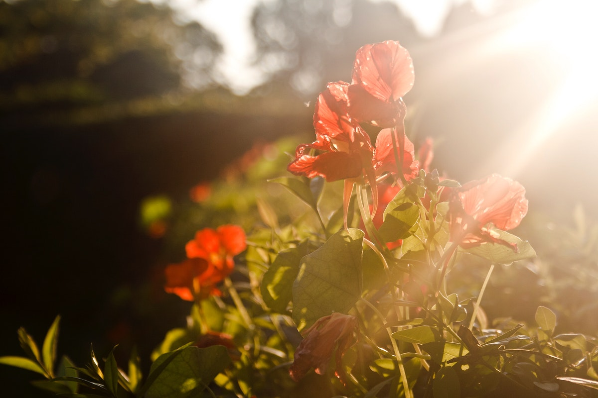 Spring background with red flowers and sunlight