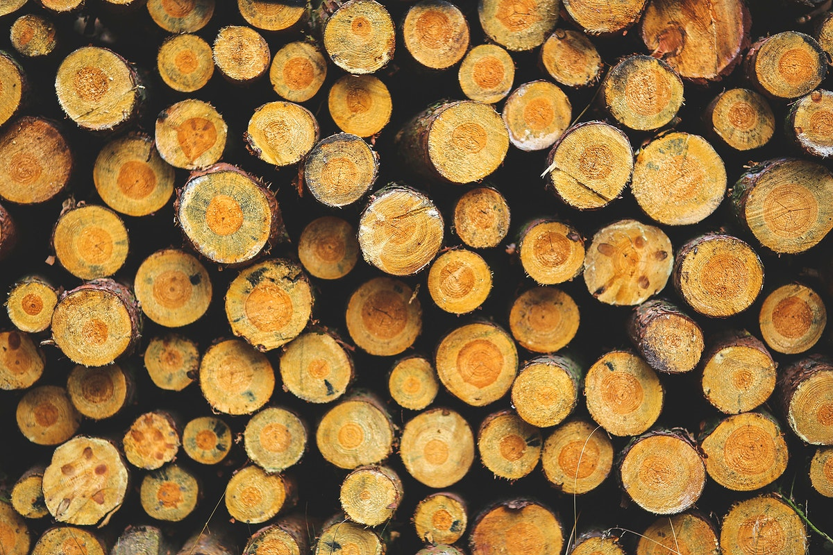 Close up of fresh cut logs. Visit Kaboompics for more free images.