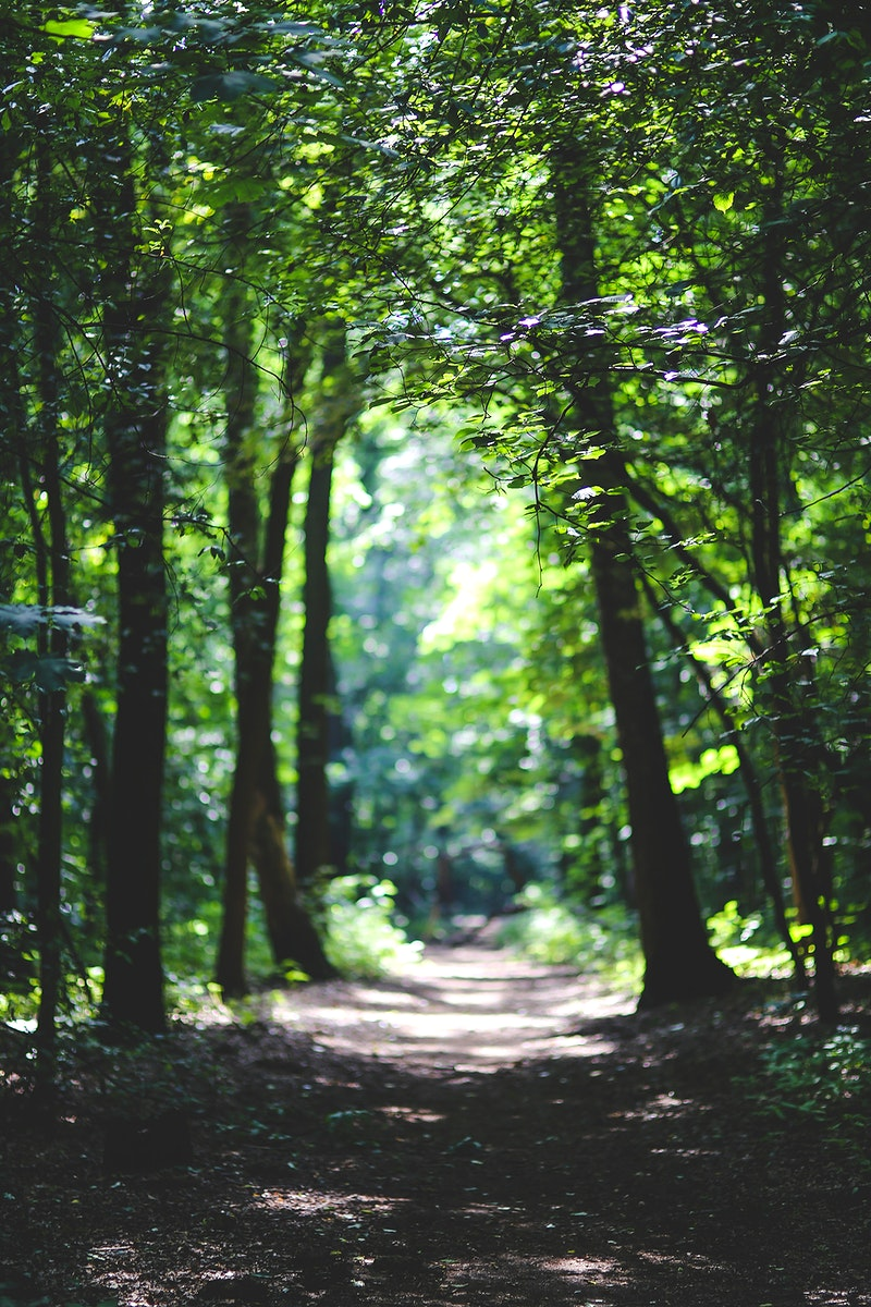 Walkway through the forest. Visit Kaboompics for more free images.