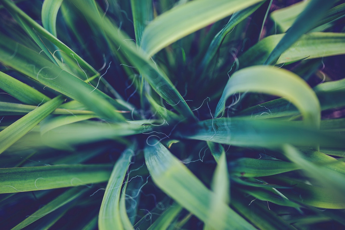 Green leaves. Visit Kaboompics for more free images.