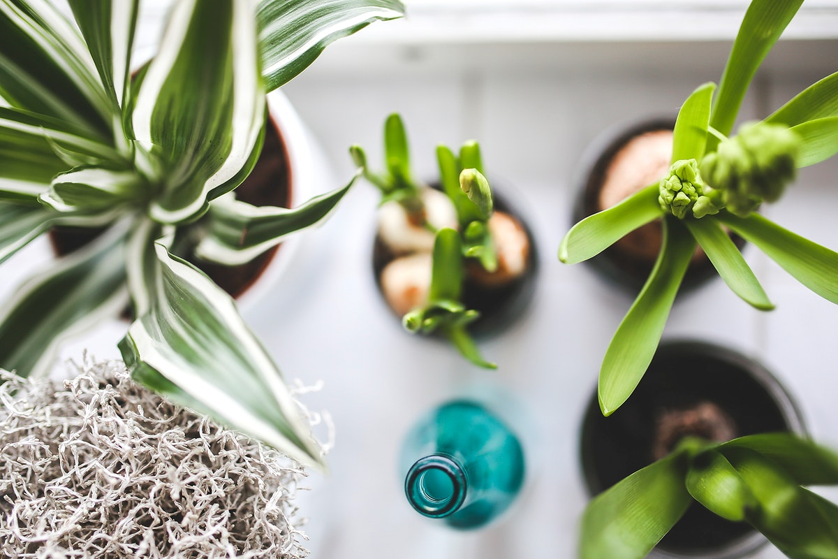 Potted plants. Visit Kaboompics for more free images.