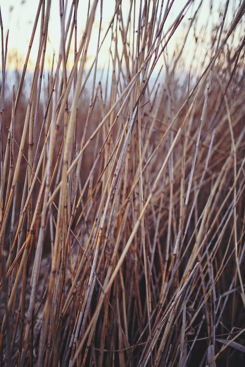 Sea grass by a lake. Visit Kaboompics for more free images.
