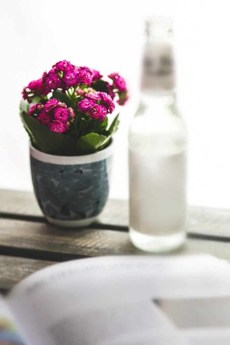 A pot with pink flower on a table. Visit Kaboompics for more free images.