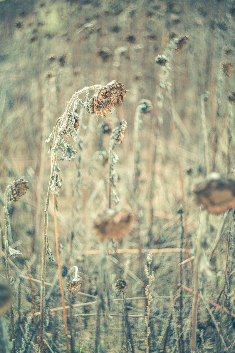 Dry flowers on a field