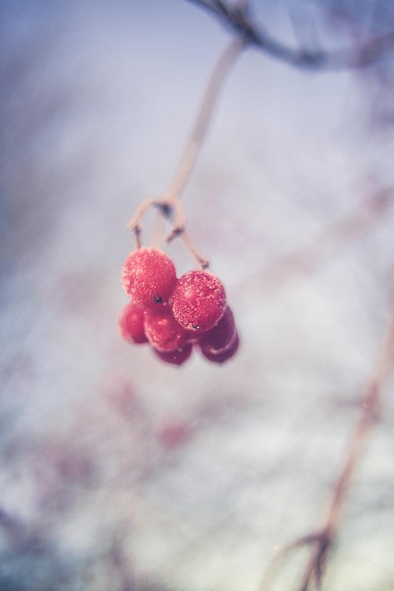 Snowflakes on red berries