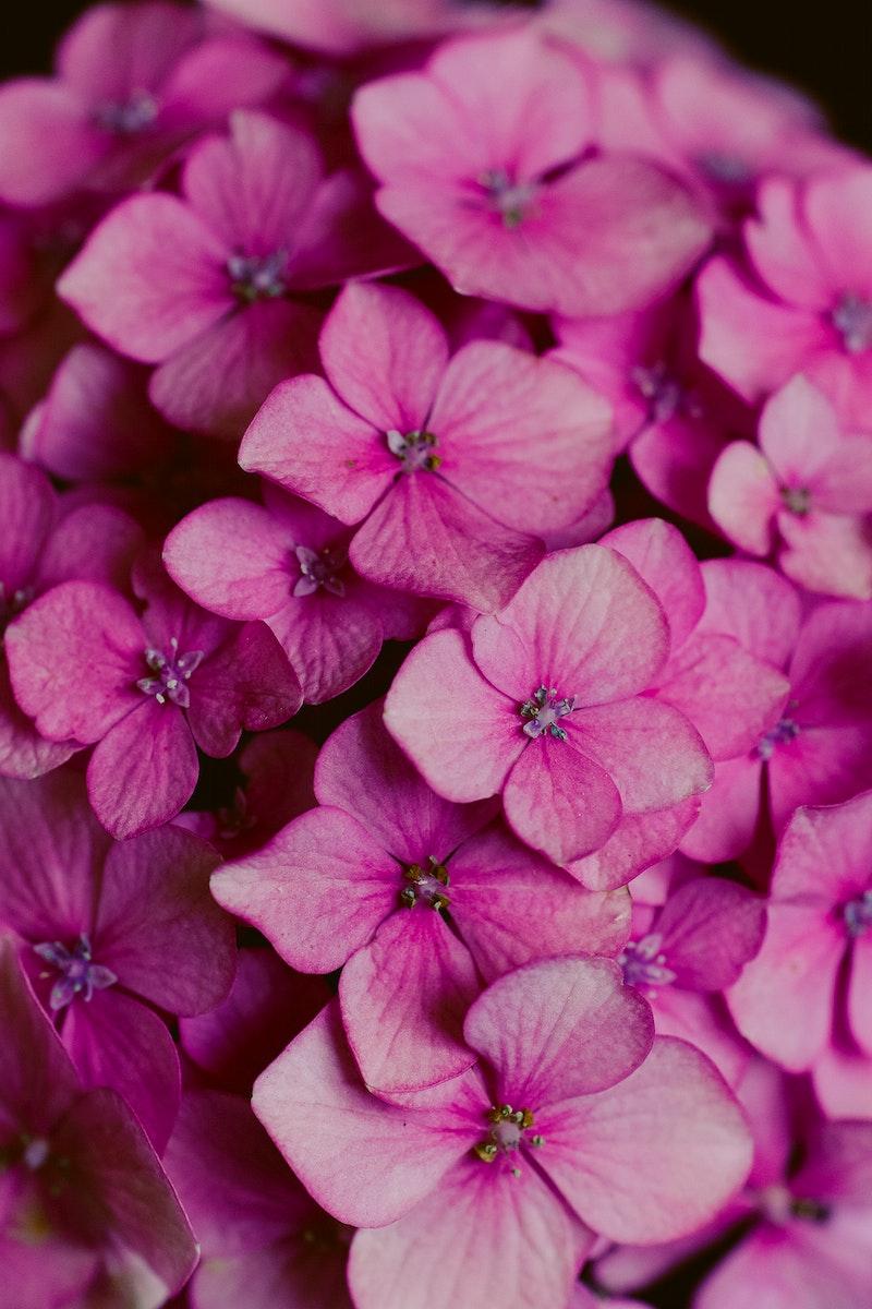 Blooming beautiful pink flowers