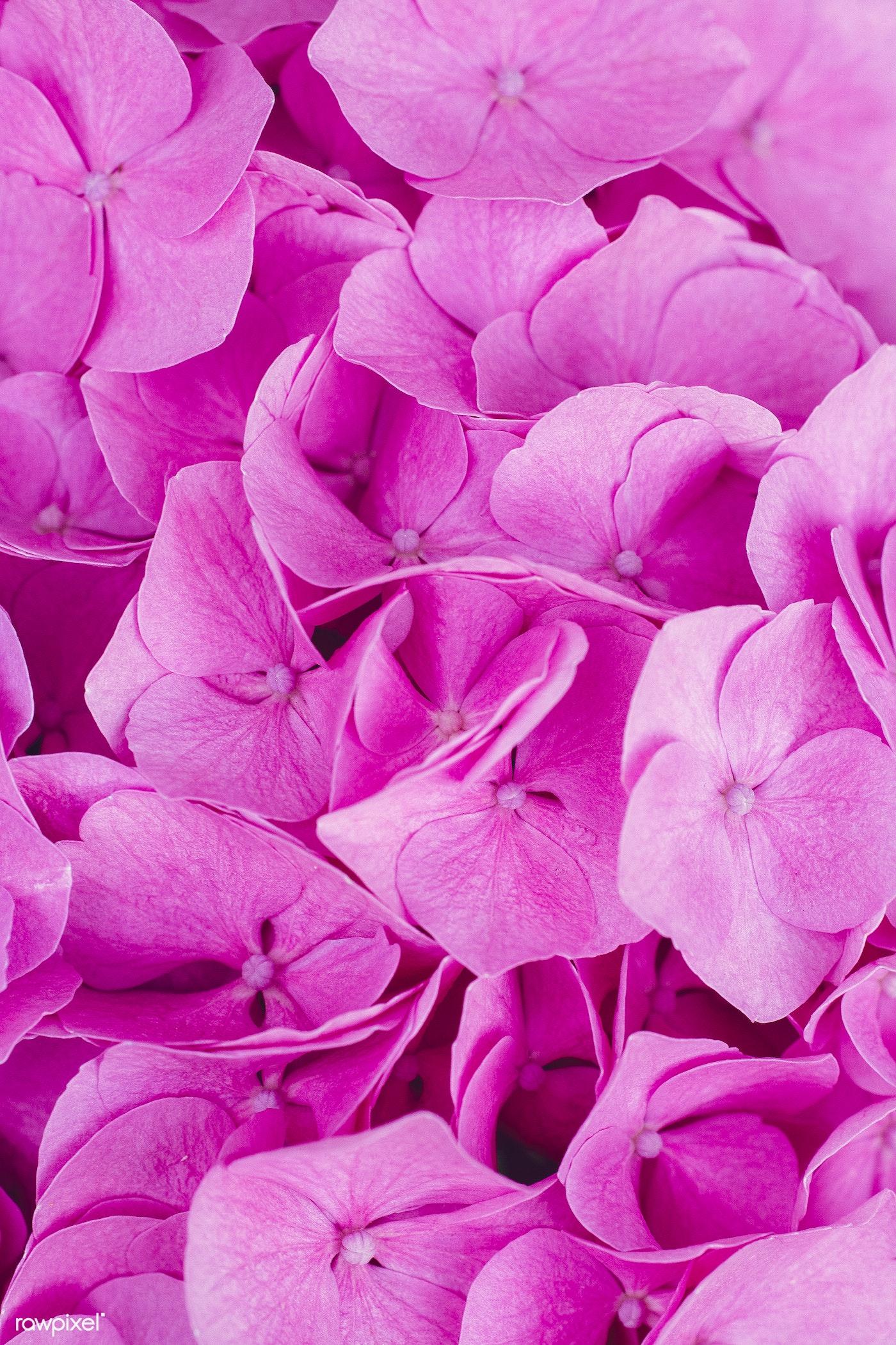 Closeup Of Pink Flowers Textured Wallpaper By Markus Spiske Id 457089