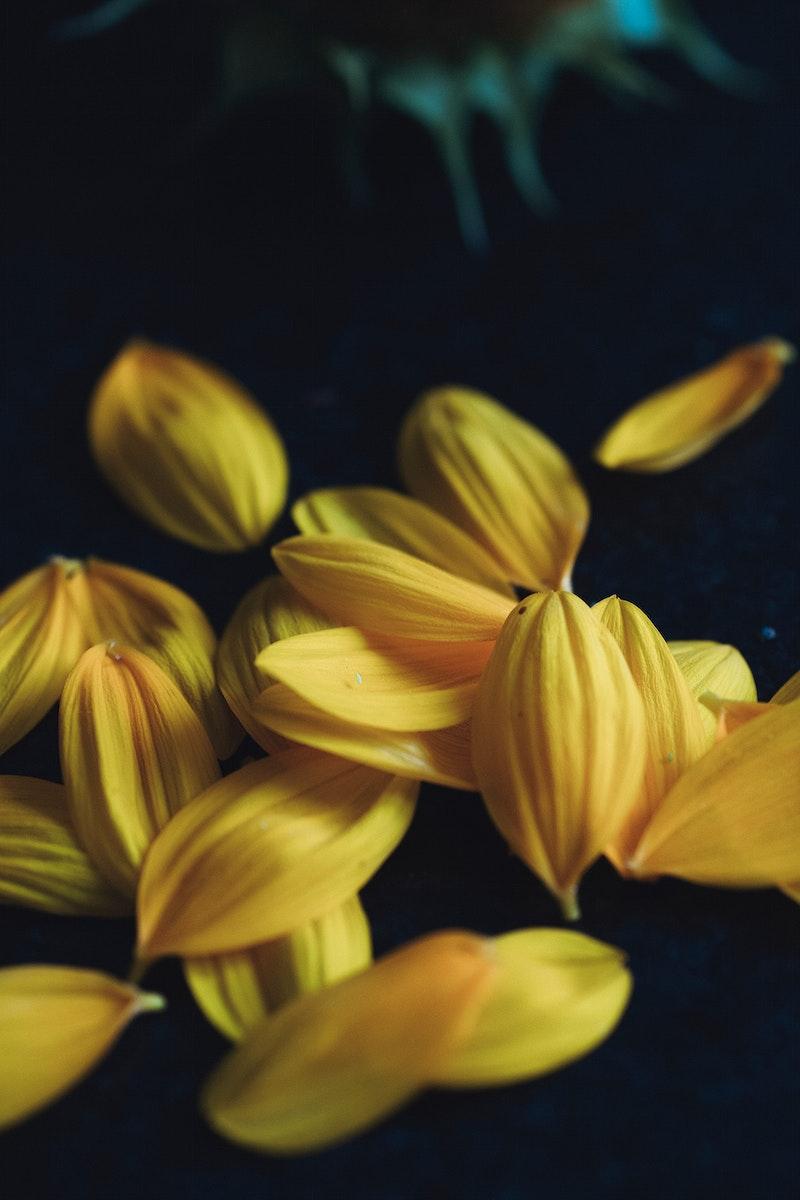 Sun flower petals on black background