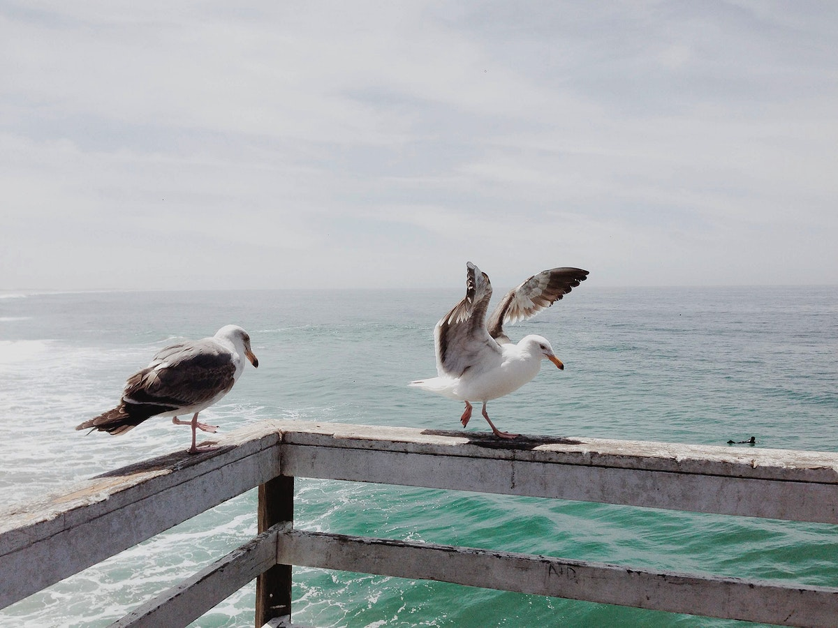 Seagulls at a pier