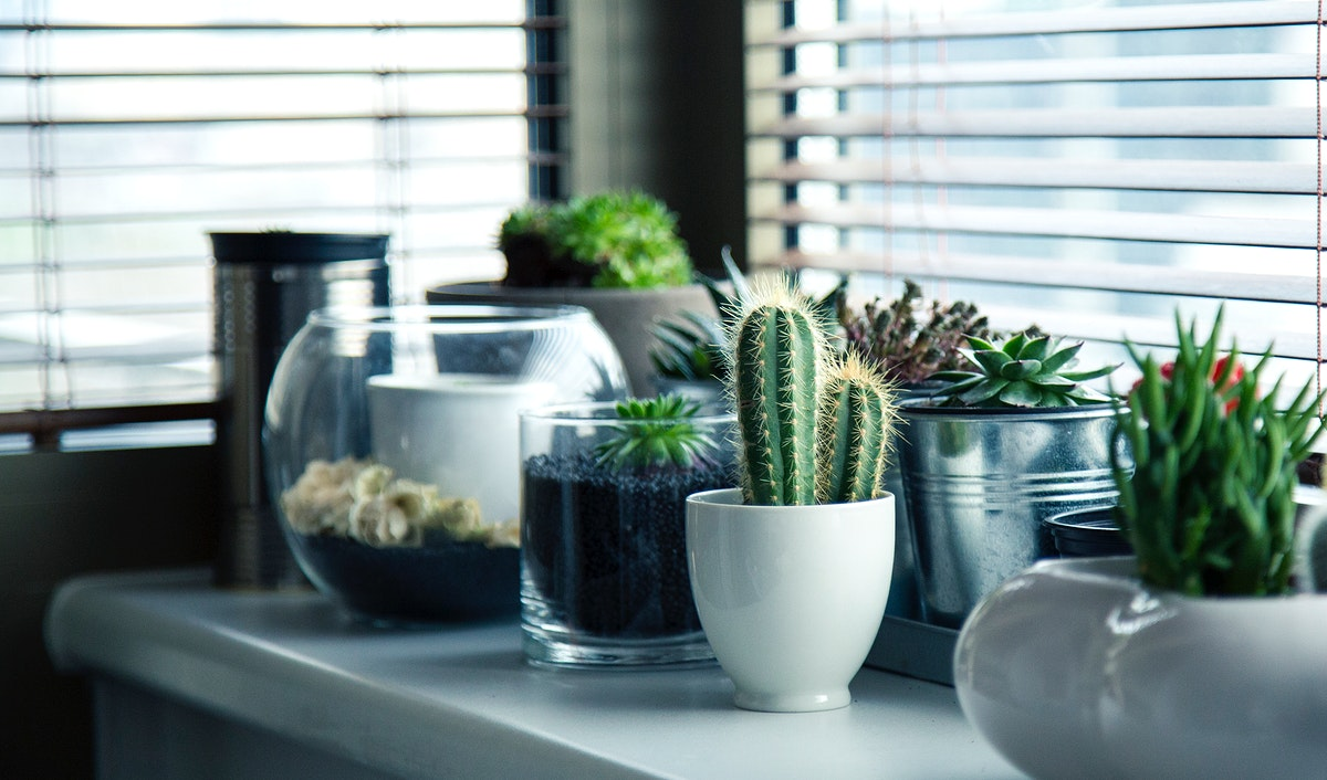Different kinds of plants in tiny pots