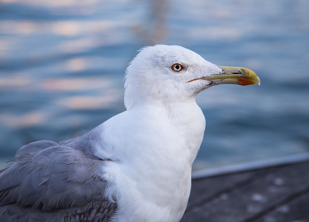 A seagull by the water
