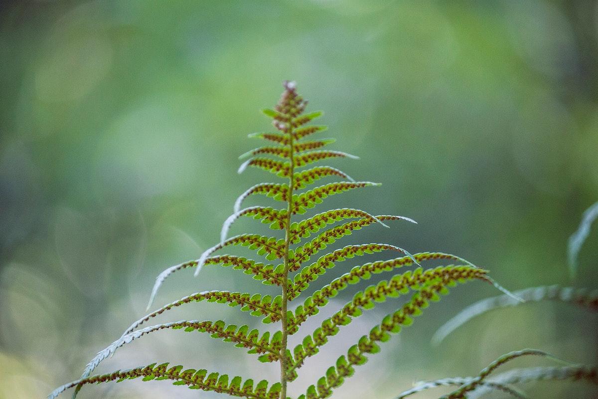 Close up of a green fern leaf