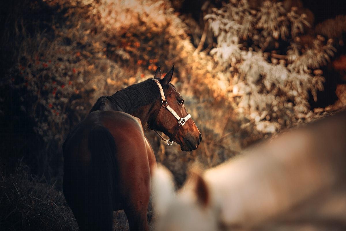 Beautiful horses at Chevals Horse Riding Center Vale do Sol, Nova Lima, Brazil