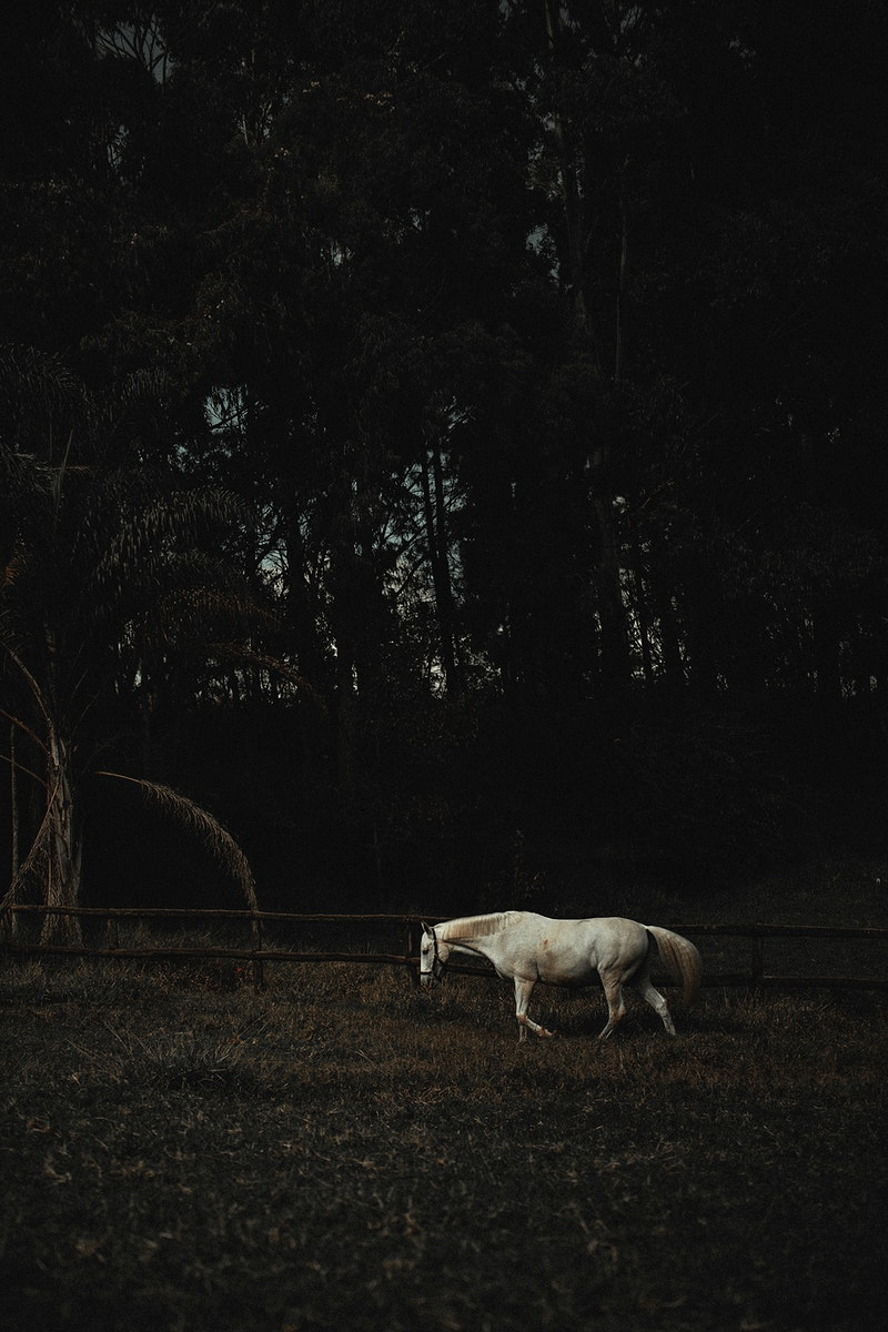 A white horse in a field at Chevals Horse Riding Center Vale do Sol, Nova Lima, Brazil