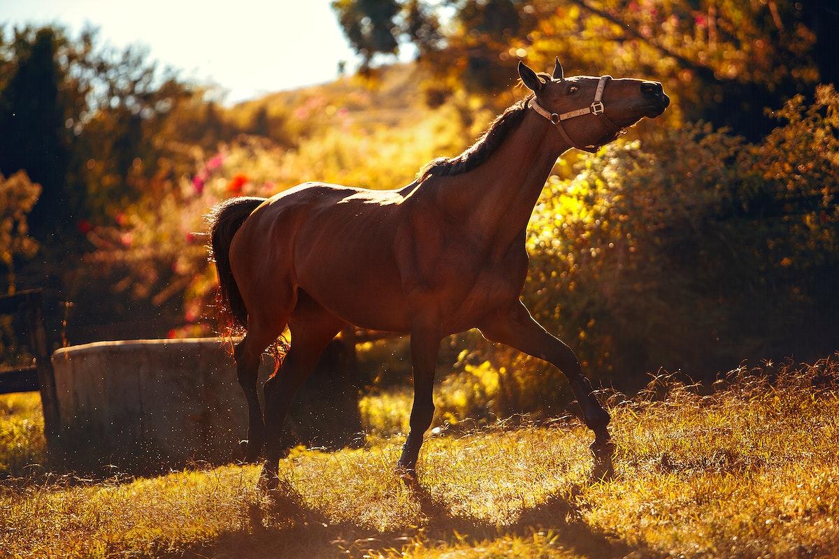 View of horses at Belo Horizonte, Brazil