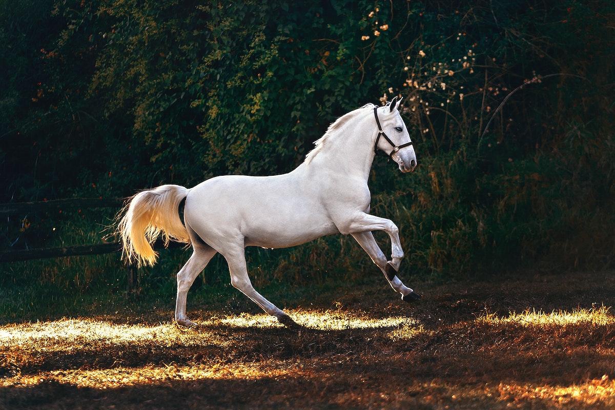 A white horse in a field at Belo Horizonte, Brazil