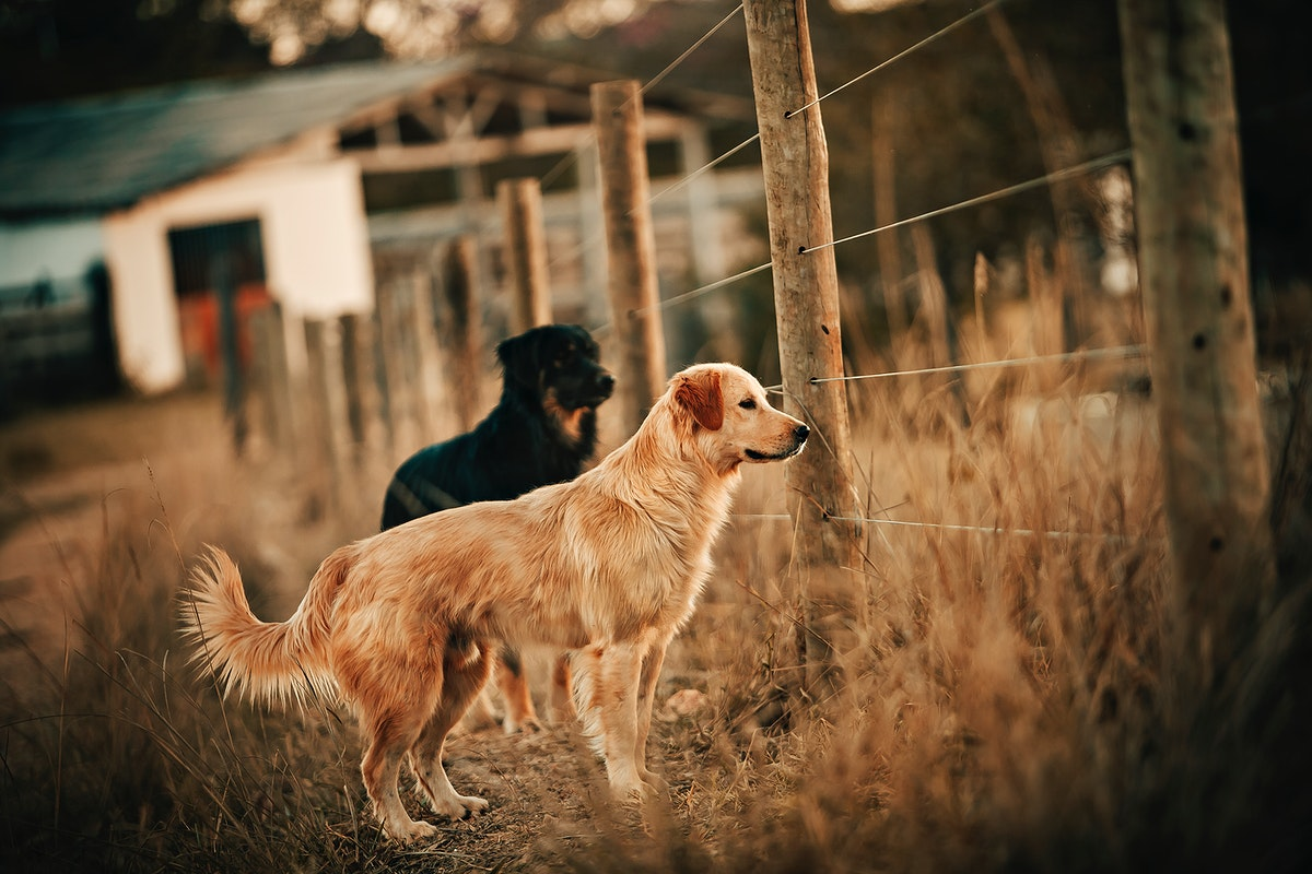 Dogs at a farm in Belo Horizonte, Brazil