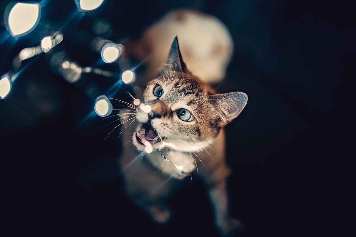 Cat playing with lights