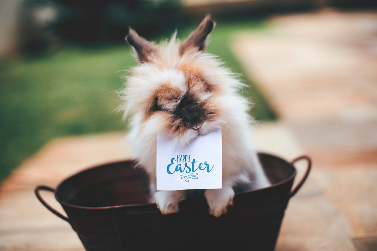 Bunny with Happy Easter card