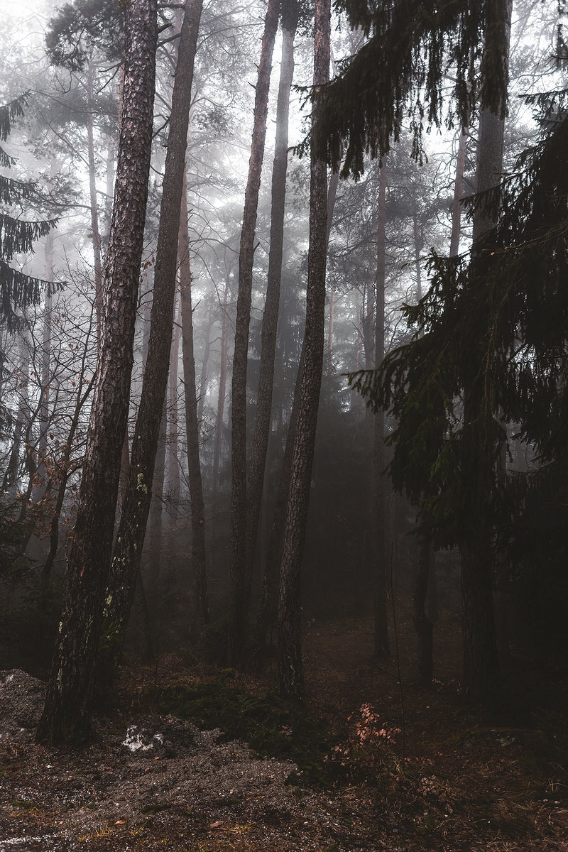 Autumn mist in the forest