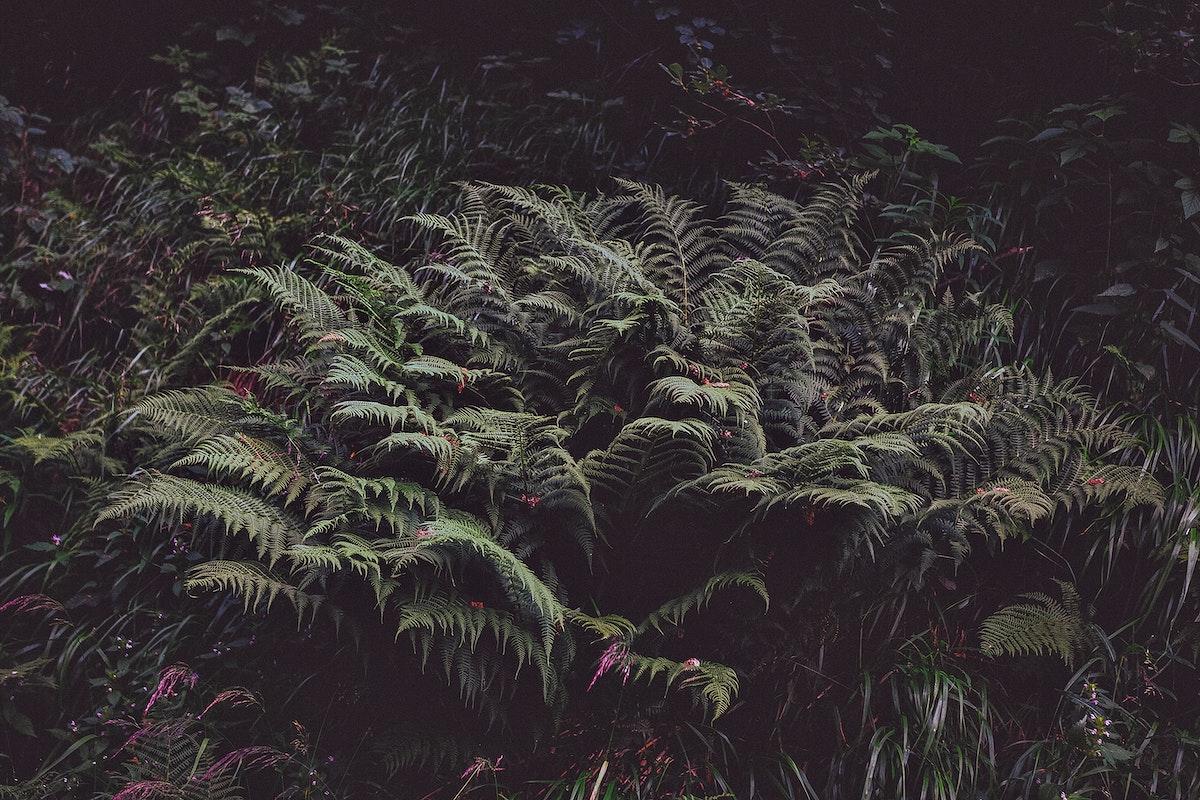 Fern plants in a dark environment