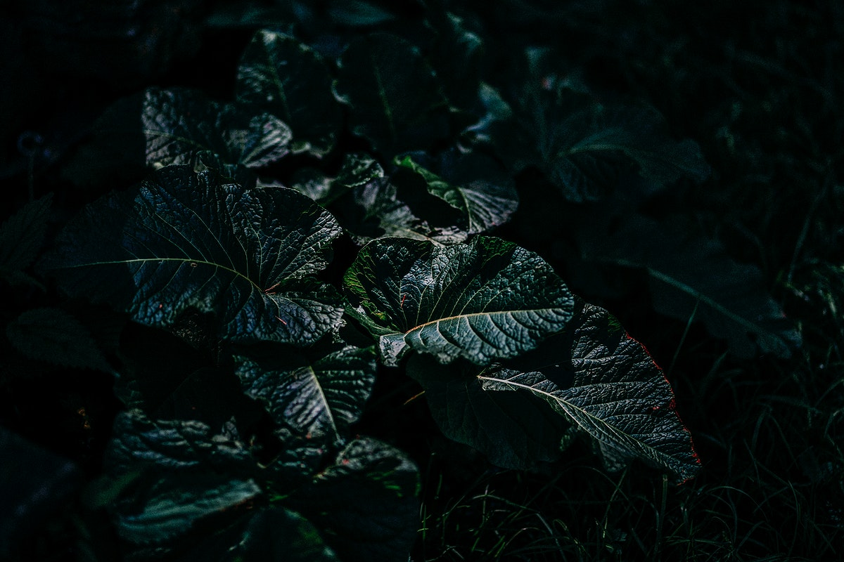 Green leaves in a dark environment