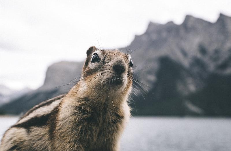 A squirrel by the Lake Minnewanka, Banff, Alberta