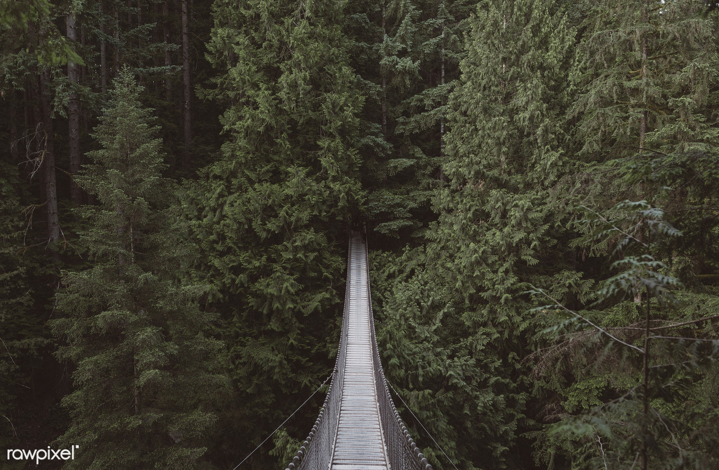 View of hanging bridge over a forest - bridge, crossing, forest, hanging bridge, natural, nature, outdoors, pathway, pine...
