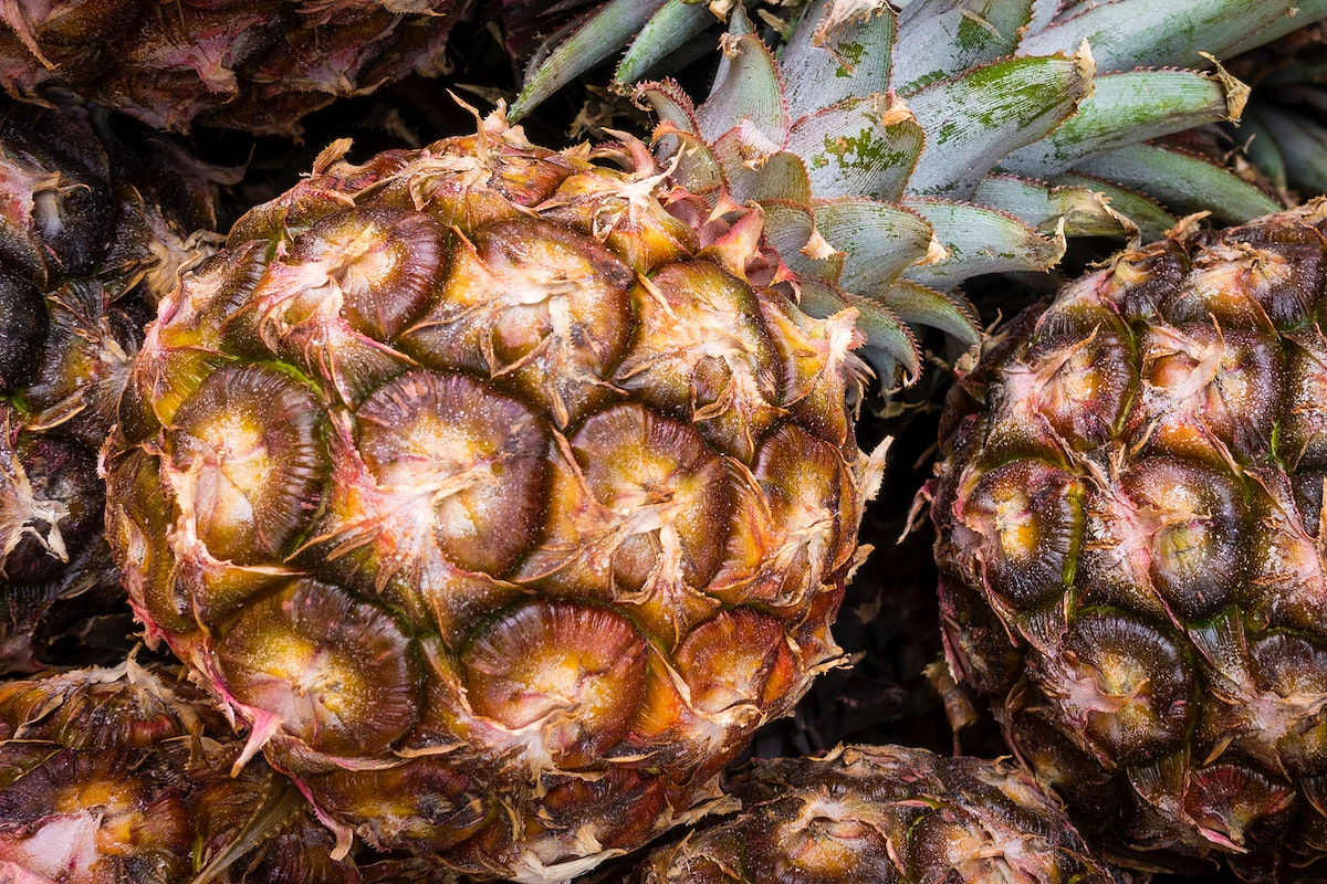 Closeup of young pineapple