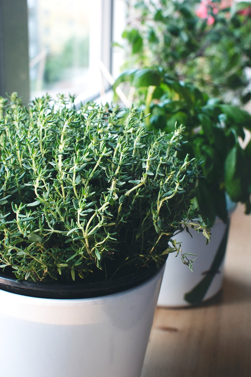 Fresh thyme by the window