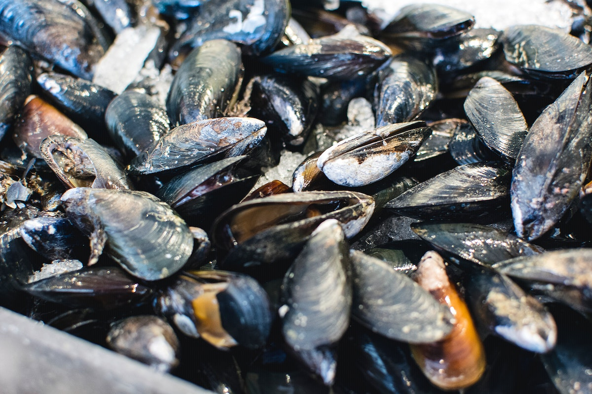 Fresh mussels at a market