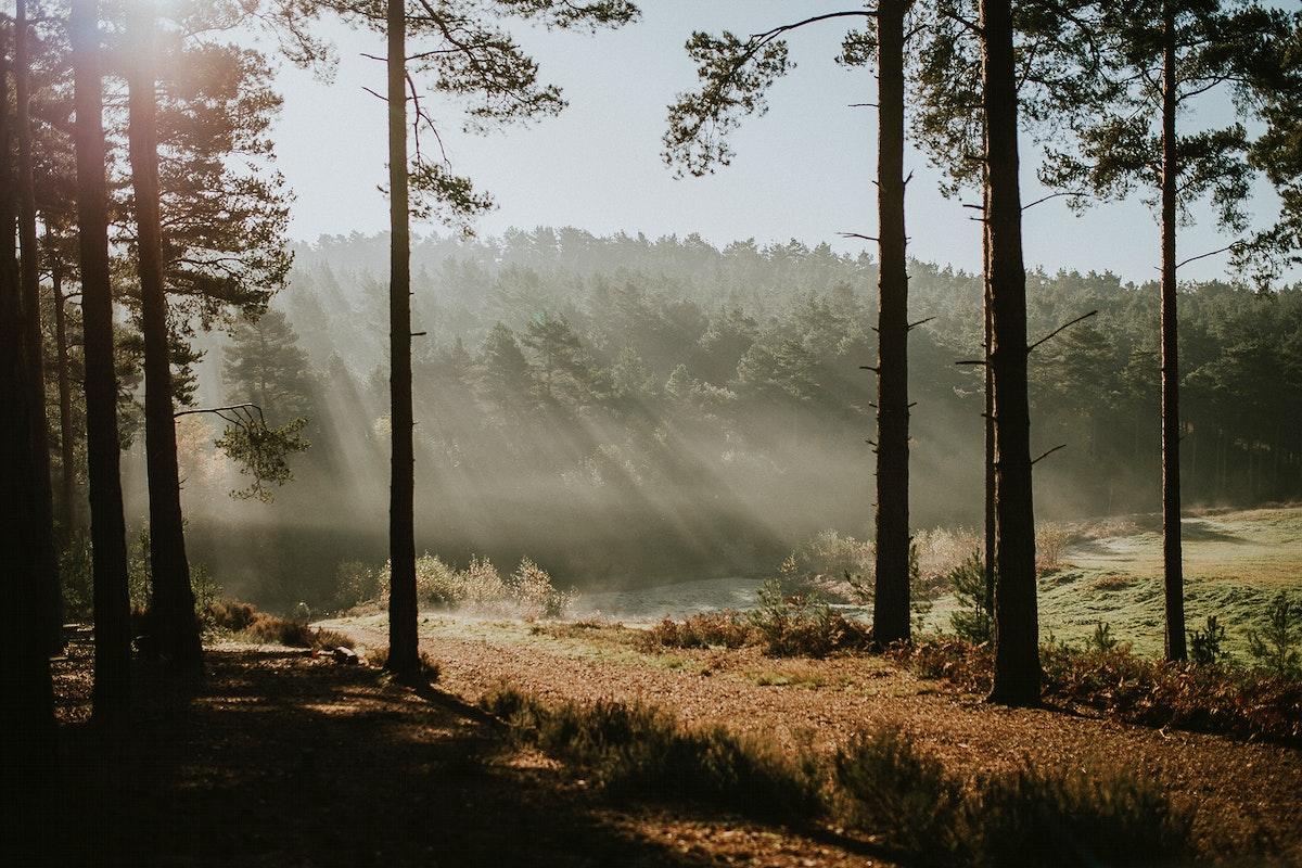 Morning mist at Bristol forest, England