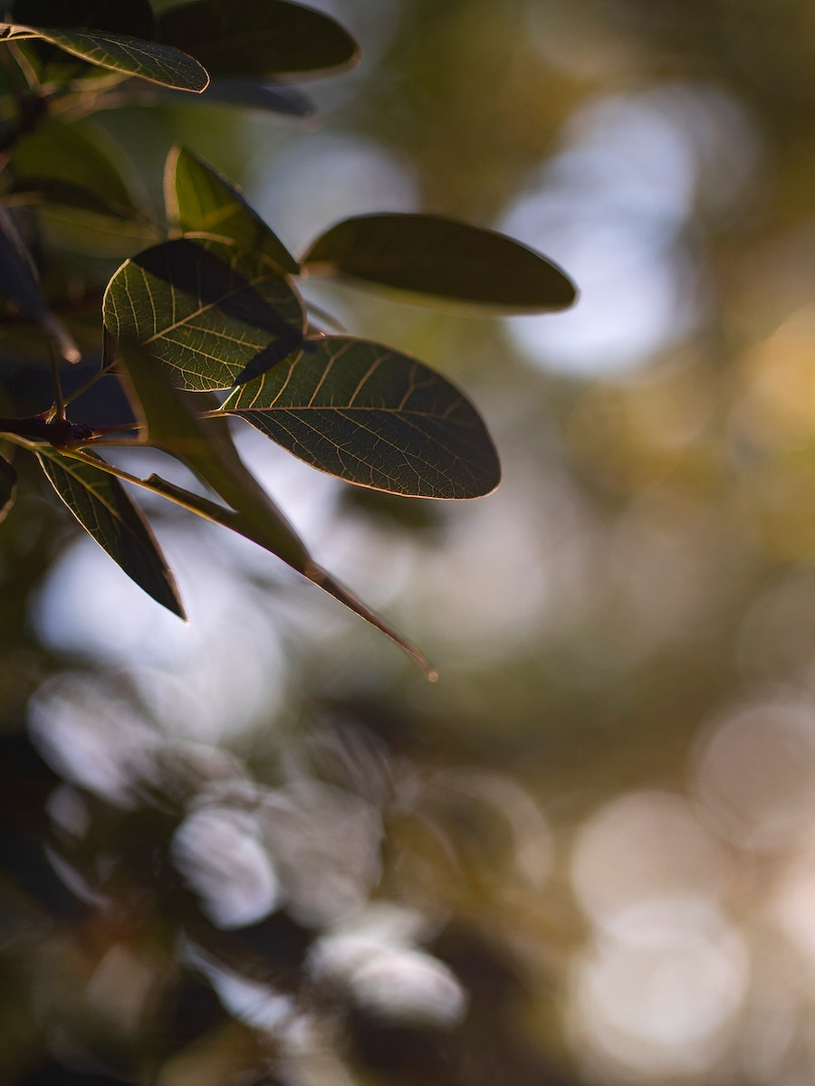 Closeup of green leaves on the tree