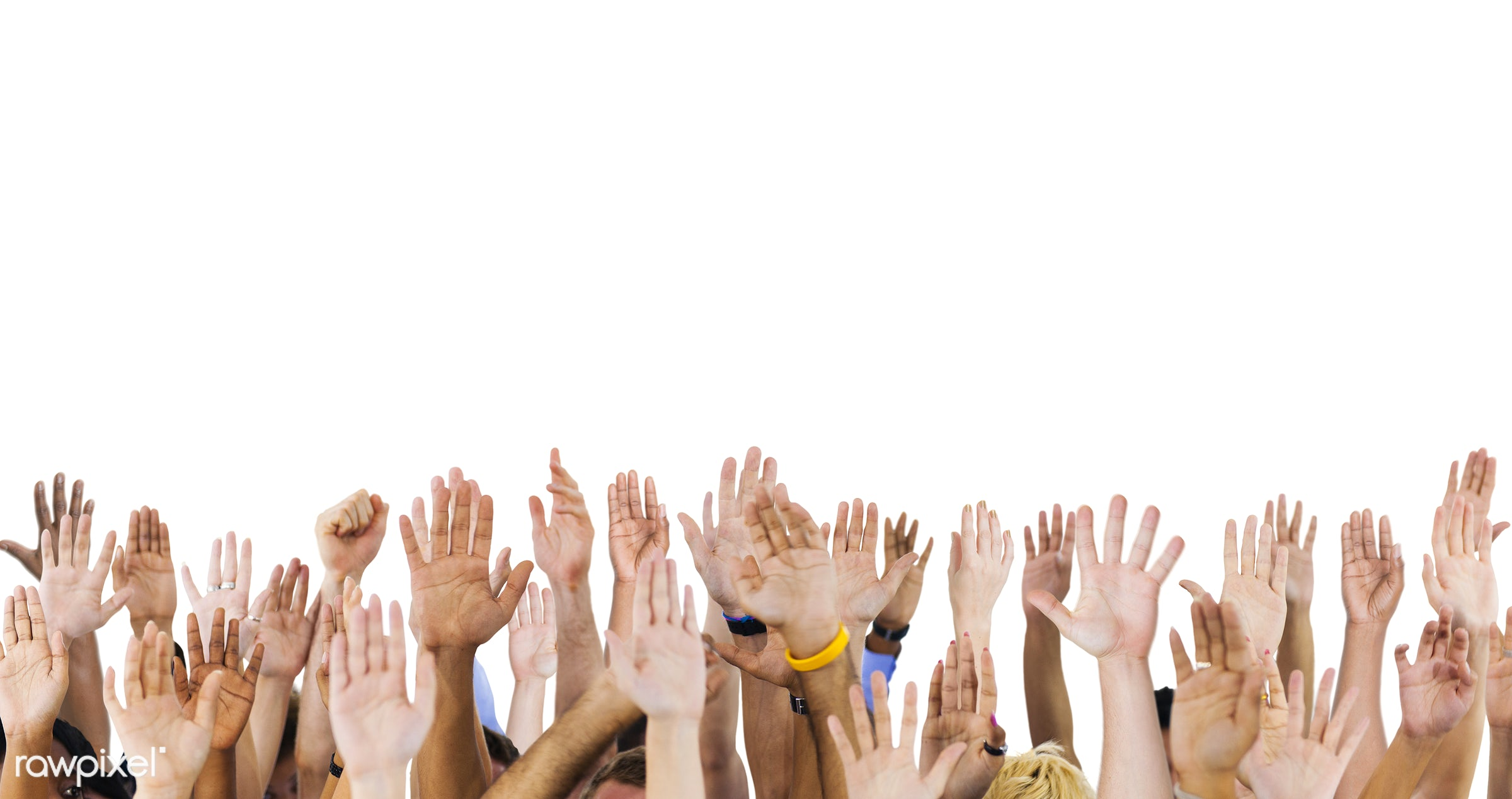 diverse, volunteer, isolated on white, variation, arms raised, raising, people, hands, reaching, participation, crowd,...